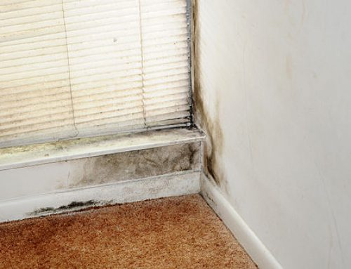 Mold Removal and close up for a Healthy surroundings