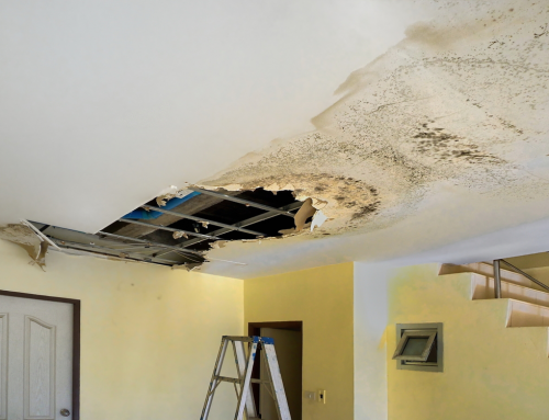 Mold Remediation Techniques