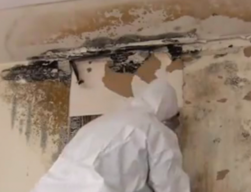 Why Any Type Of Mold Should Be Removed Once Found