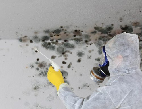 The Only Way To Permanently Remove Black Mold
